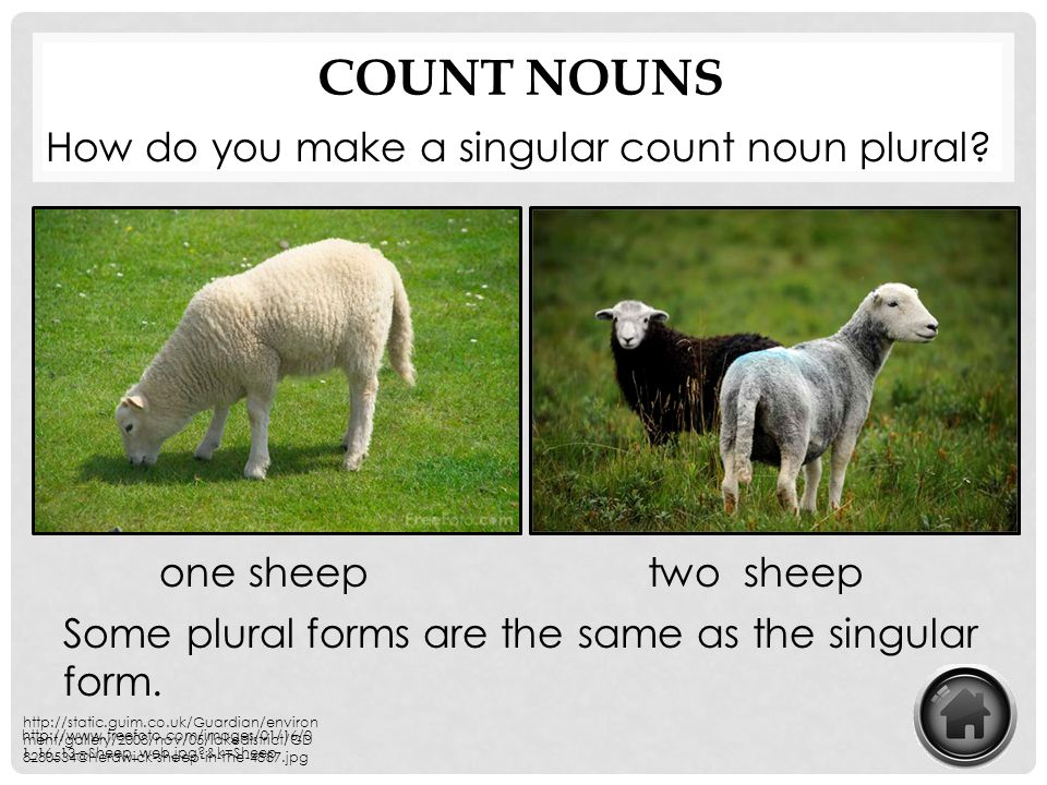 Count Nouns How do you make a singular count noun plural one sheep