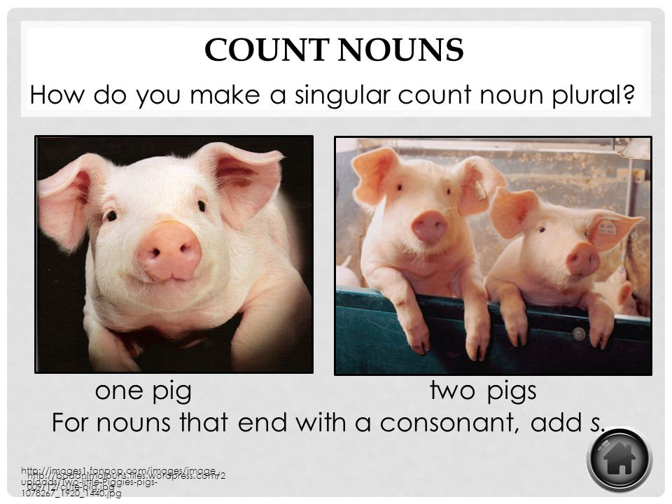 Count Nouns How do you make a singular count noun plural one pig two