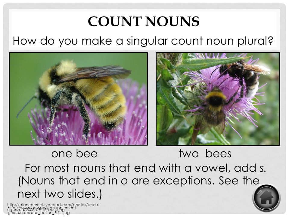 Count Nouns How do you make a singular count noun plural one bee two