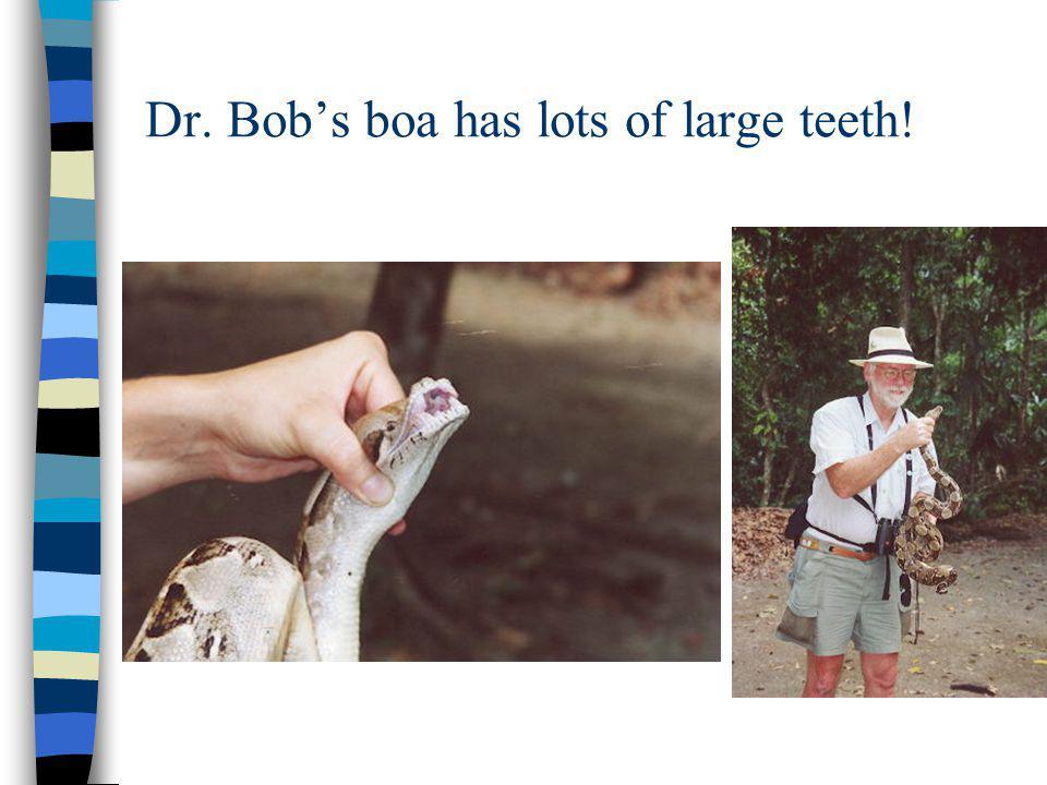 Dr. Bob's boa has lots of large teeth!