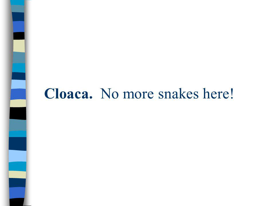 Cloaca. No more snakes here!