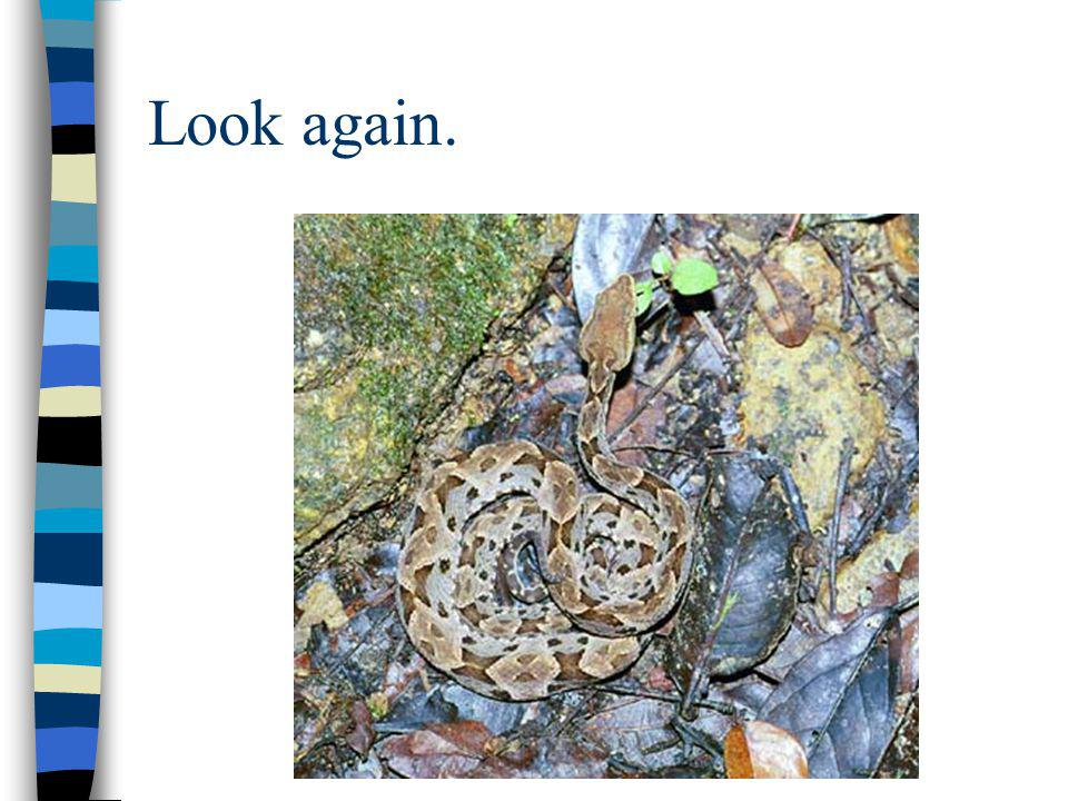 Look again.