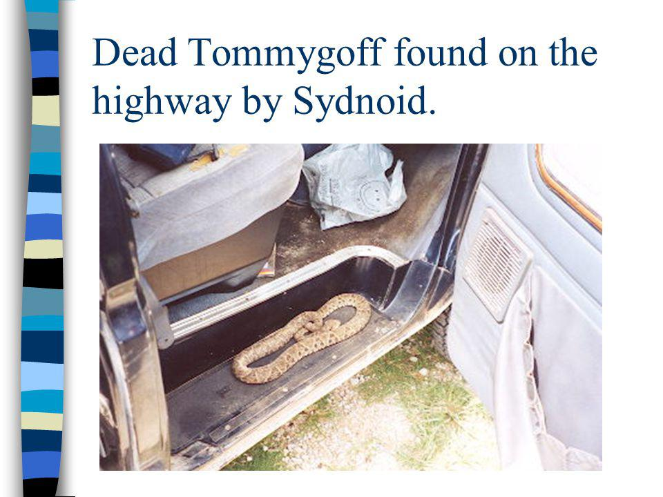 Dead Tommygoff found on the highway by Sydnoid.