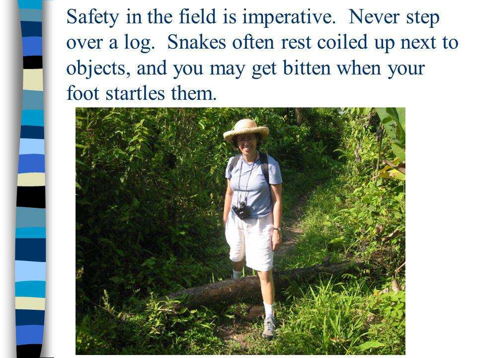 Safety in the field is imperative. Never step over a log