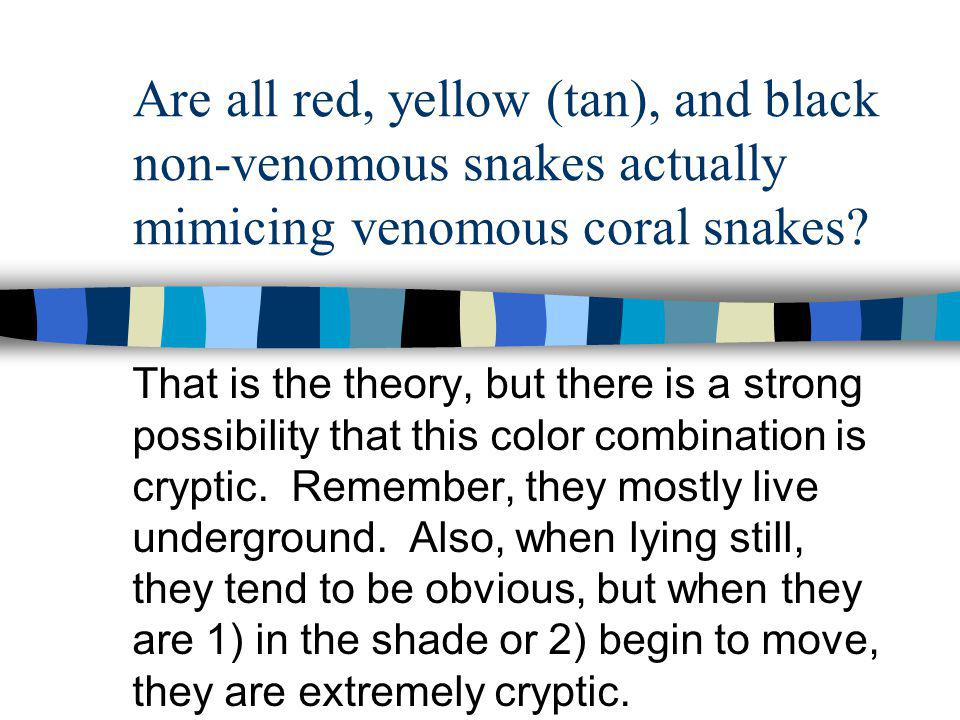 Are all red, yellow (tan), and black non-venomous snakes actually mimicing venomous coral snakes