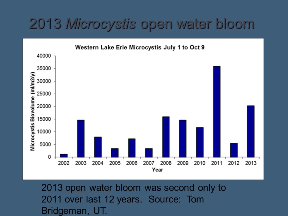 2013 Microcystis open water bloom
