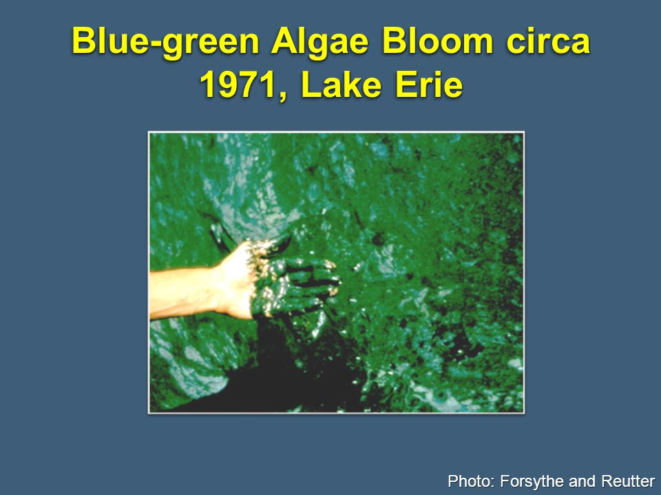 Blue-green Algae Bloom circa 1971, Lake Erie