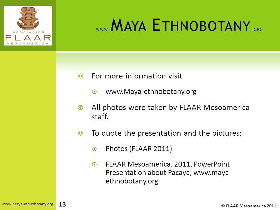 www.Maya Ethnobotany.org