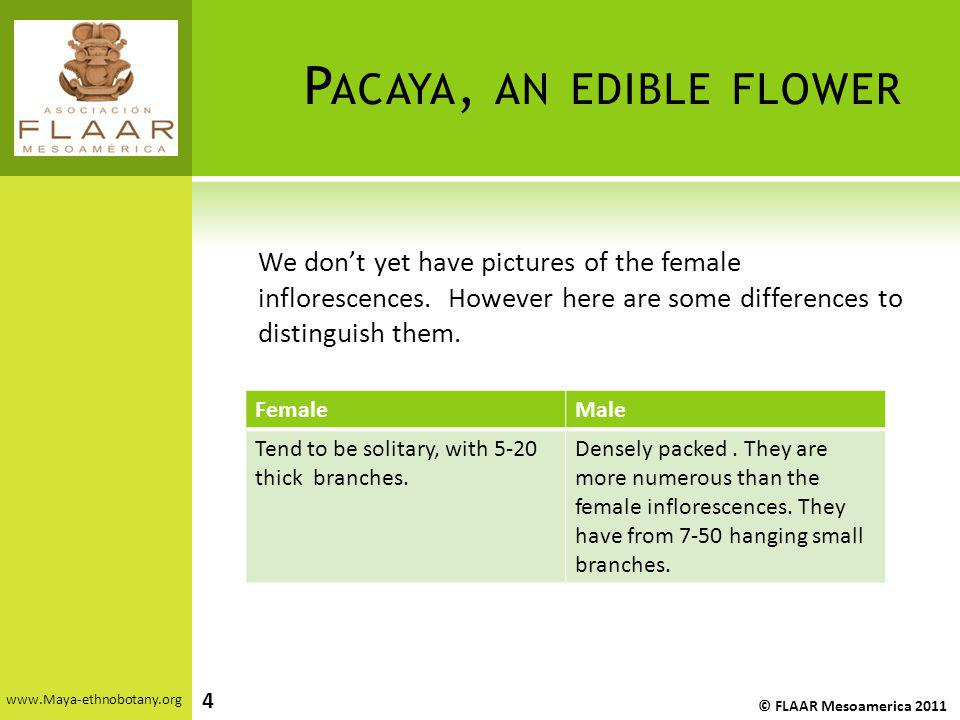 Pacaya, an edible flower