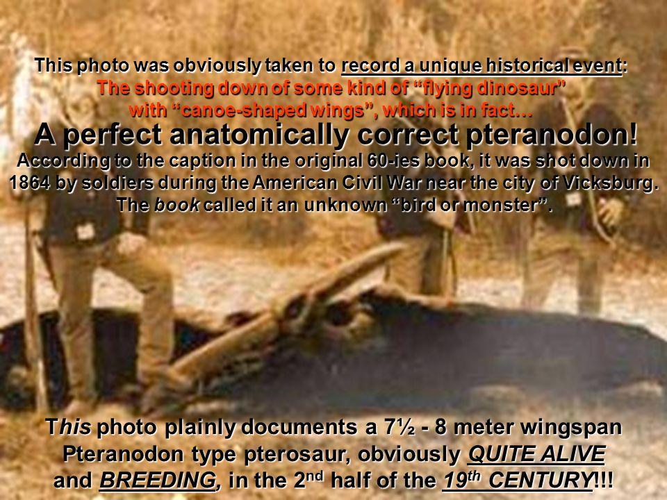 A perfect anatomically correct pteranodon!
