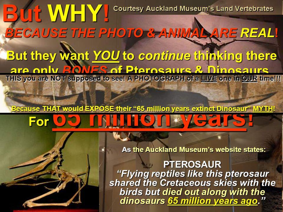Courtesy Auckland Museum's Land Vertebrates