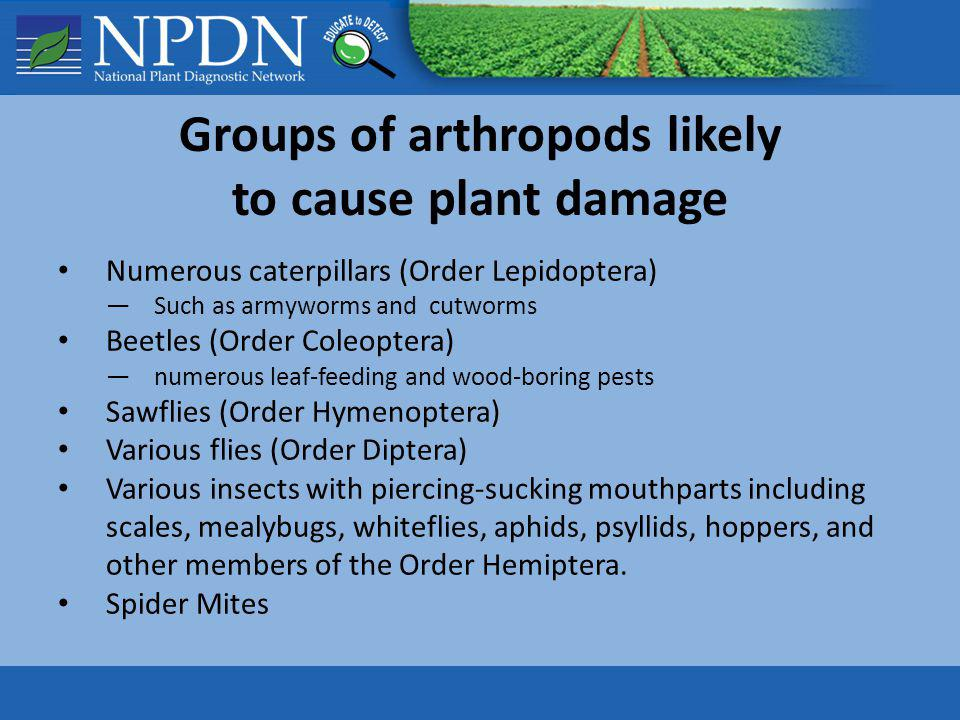 Groups of arthropods likely to cause plant damage
