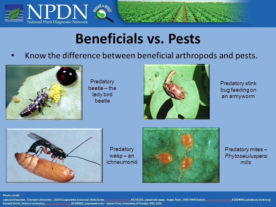 Know the difference between beneficial arthropods and pests.