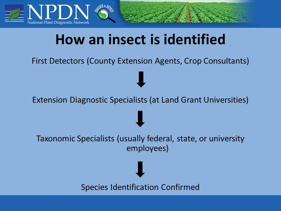 How an insect is identified