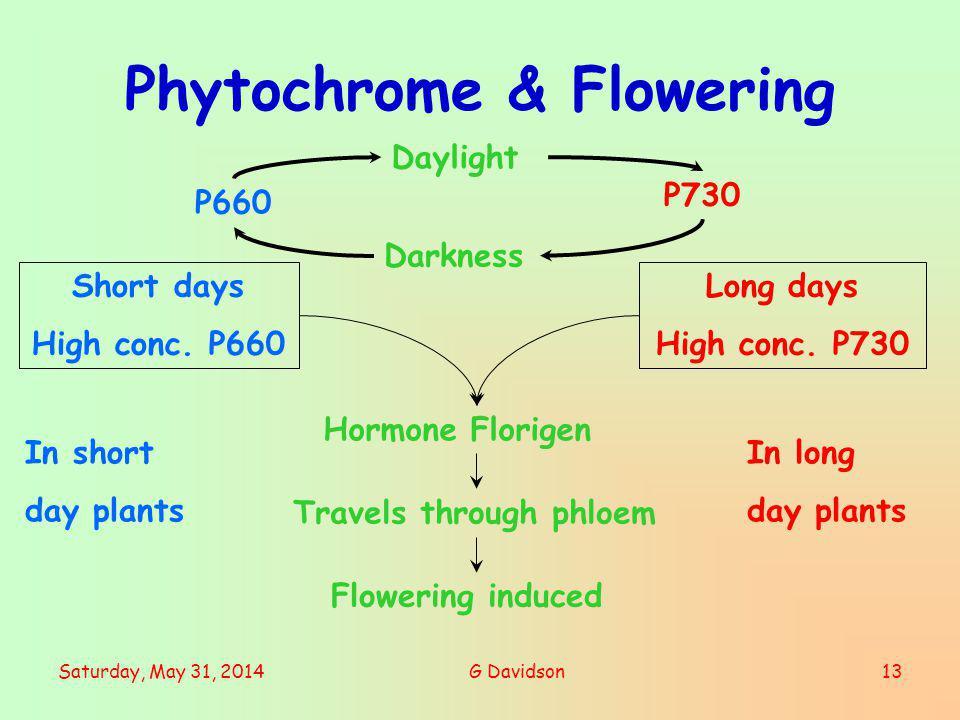 Phytochrome & Flowering