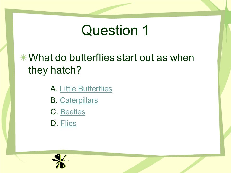 Question 1 What do butterflies start out as when they hatch