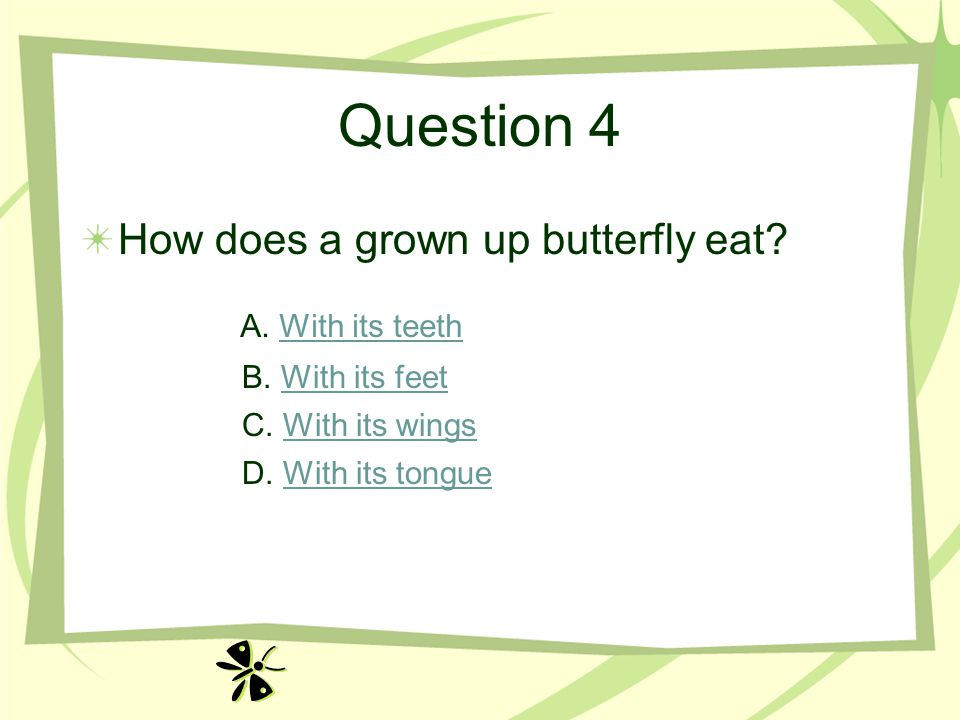 Question 4 How does a grown up butterfly eat A. With its teeth