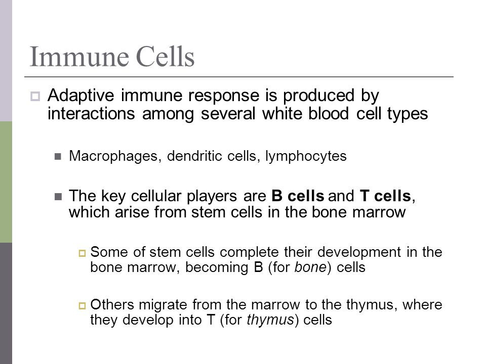 Immune Cells Adaptive immune response is produced by interactions among several white blood cell types.