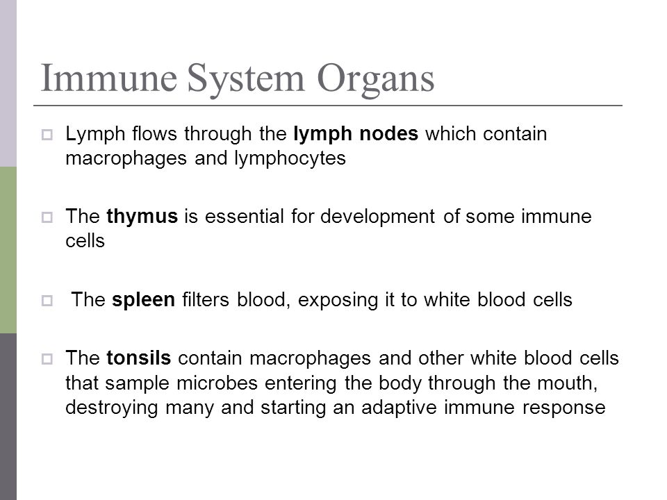 Immune System Organs Lymph flows through the lymph nodes which contain macrophages and lymphocytes.