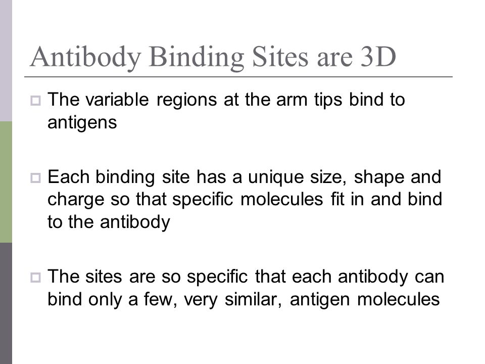 Antibody Binding Sites are 3D