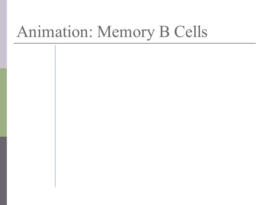 Animation: Memory B Cells