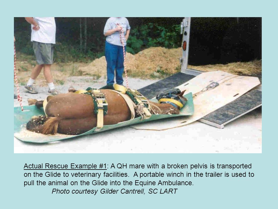 Actual Rescue Example #1: A QH mare with a broken pelvis is transported on the Glide to veterinary facilities. A portable winch in the trailer is used to pull the animal on the Glide into the Equine Ambulance.
