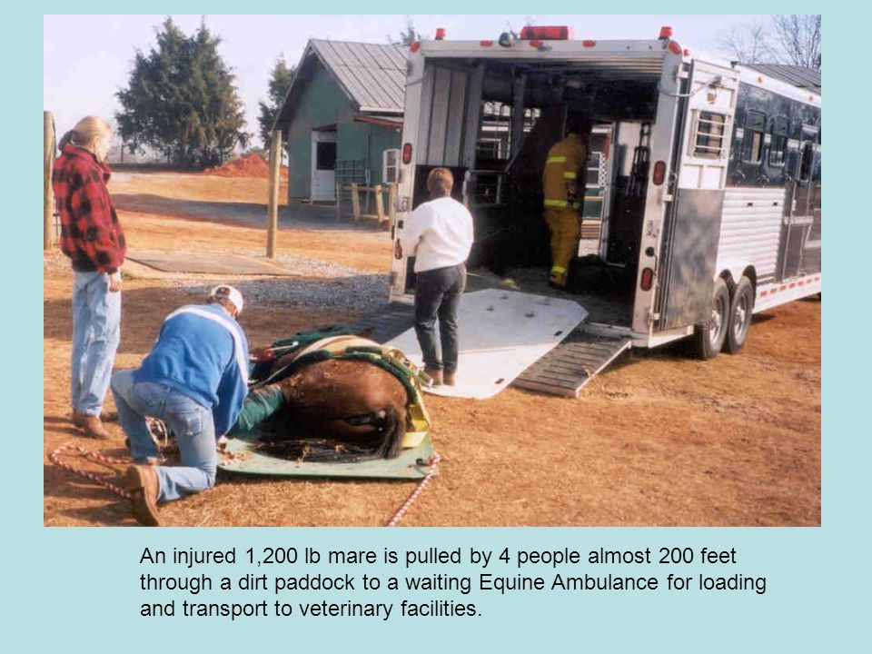 An injured 1,200 lb mare is pulled by 4 people almost 200 feet through a dirt paddock to a waiting Equine Ambulance for loading and transport to veterinary facilities.