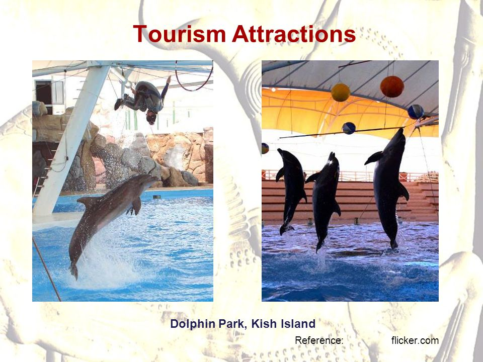 Tourism Attractions Dolphin Park, Kish Island Reference: flicker.com
