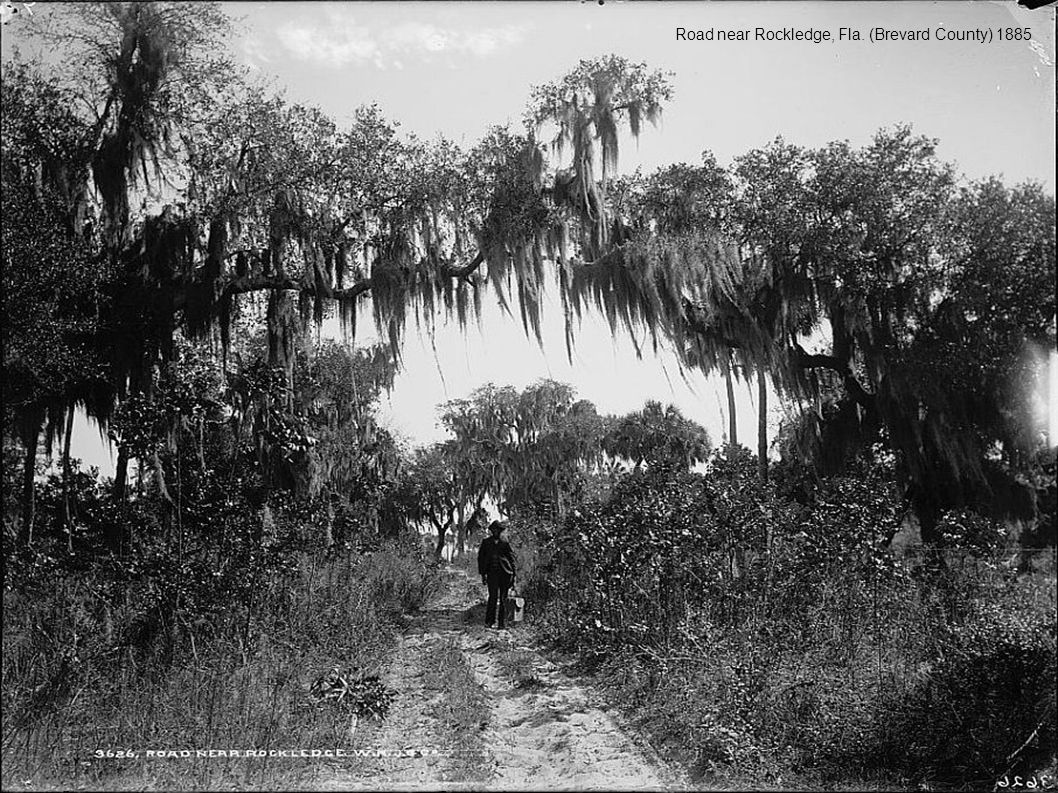 Road near Rockledge, Fla. (Brevard County) 1885