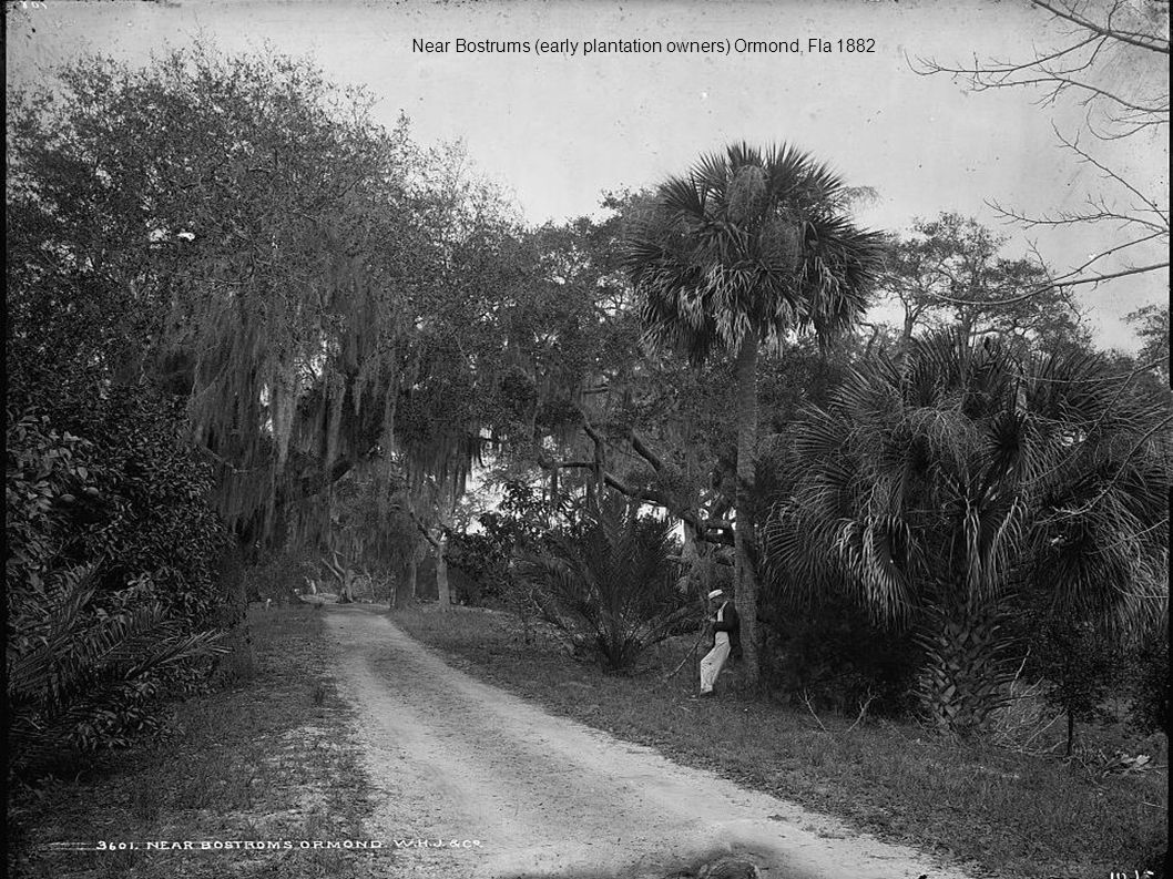 Near Bostrums (early plantation owners) Ormond, Fla 1882
