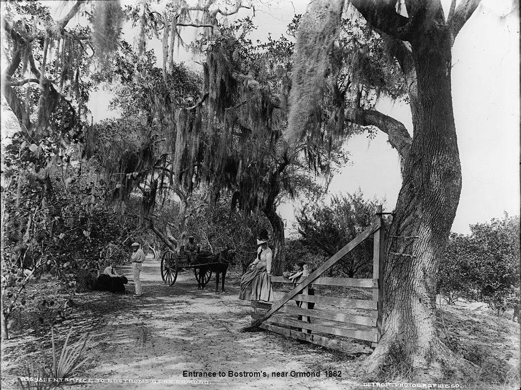 Entrance to Bostrom s, near Ormond 1882