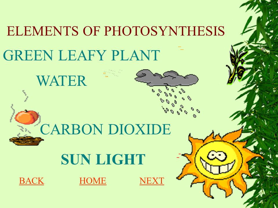 ELEMENTS OF PHOTOSYNTHESIS
