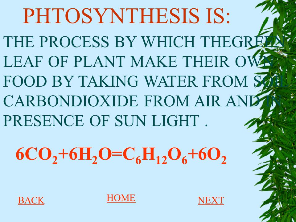PHTOSYNTHESIS IS: 6CO2+6H2O=C6H12O6+6O2