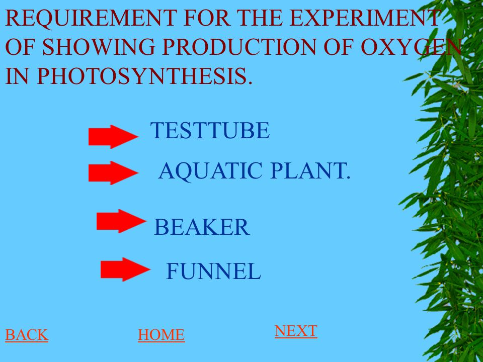 REQUIREMENT FOR THE EXPERIMENT OF SHOWING PRODUCTION OF OXYGEN IN PHOTOSYNTHESIS.