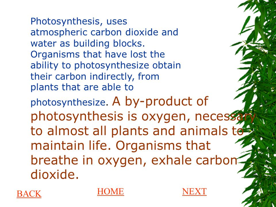 Photosynthesis, uses atmospheric carbon dioxide and water as building blocks. Organisms that have lost the ability to photosynthesize obtain their carbon indirectly, from plants that are able to