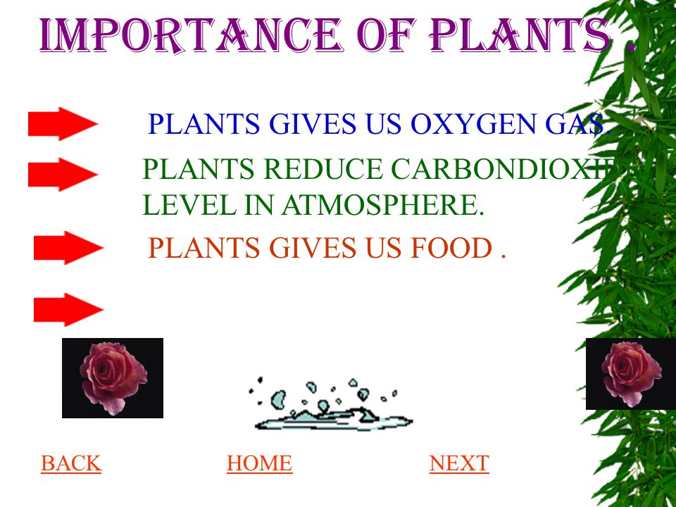 IMPORTANCE OF PLANTS . PLANTS GIVES US OXYGEN GAS.