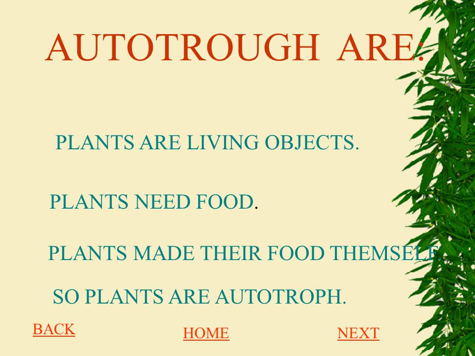 AUTOTROUGH ARE: PLANTS ARE LIVING OBJECTS. PLANTS NEED FOOD.