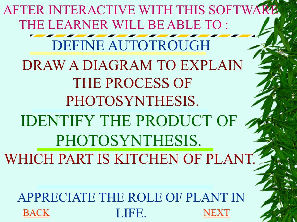 IDENTIFY THE PRODUCT OF PHOTOSYNTHESIS.