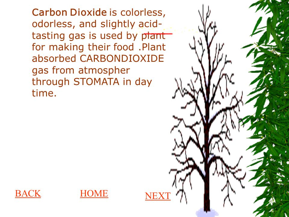 Carbon Dioxide is colorless, odorless, and slightly acid- tasting gas is used by plant for making their food .Plant absorbed CARBONDIOXIDE gas from atmospher through STOMATA in day time.