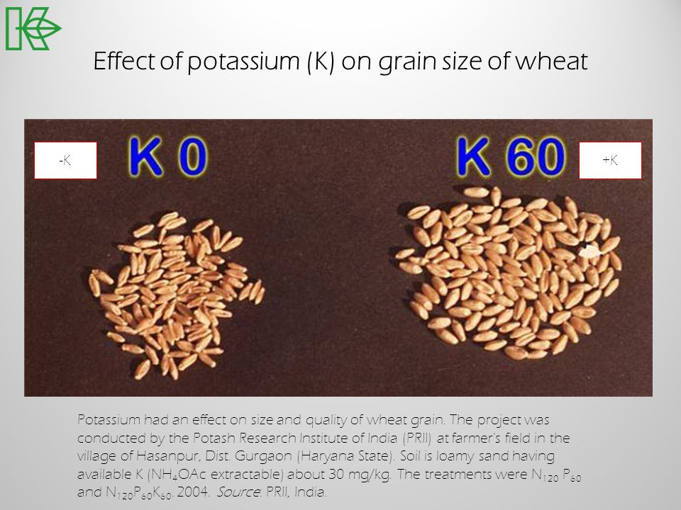 Effect of potassium (K) on grain size of wheat