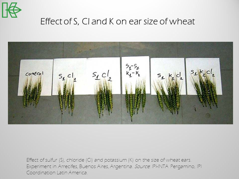 Effect of S, Cl and K on ear size of wheat