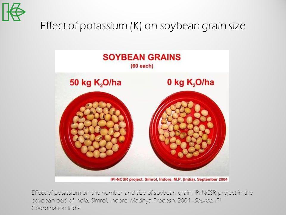 Effect of potassium (K) on soybean grain size