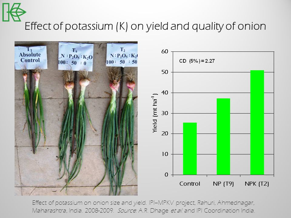 Effect of potassium (K) on yield and quality of onion
