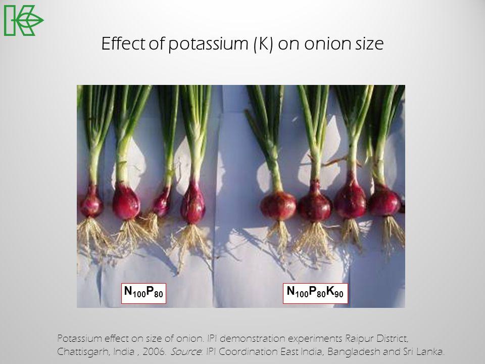 Effect of potassium (K) on onion size