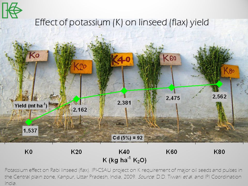 Effect of potassium (K) on linseed (flax) yield