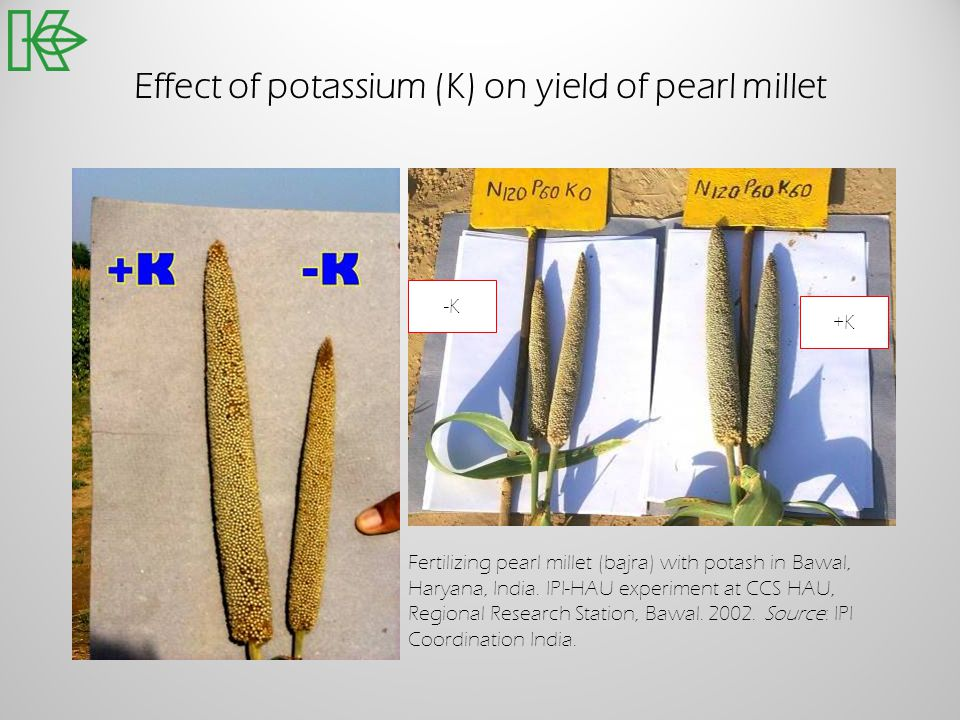 Effect of potassium (K) on yield of pearl millet