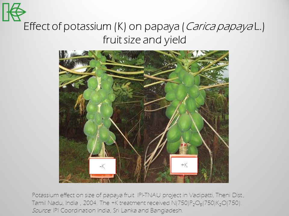 Effect of potassium (K) on papaya (Carica papaya L