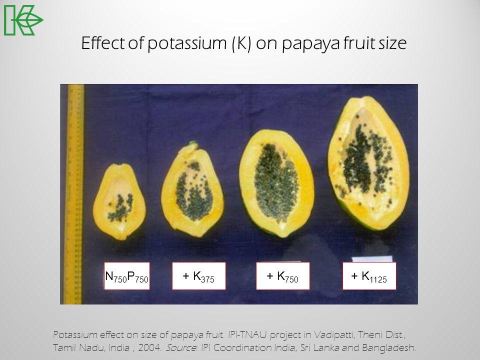 Effect of potassium (K) on papaya fruit size