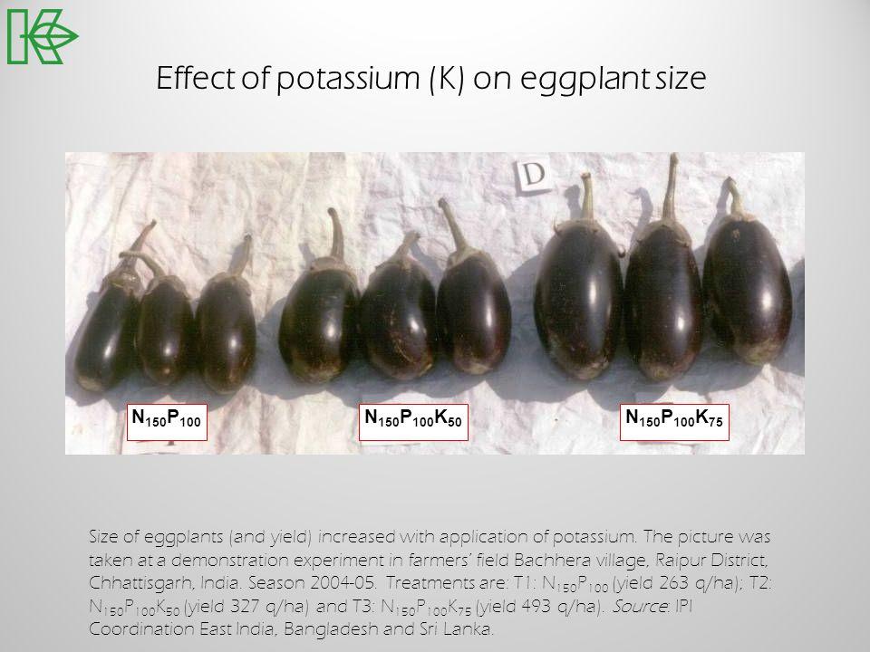 Effect of potassium (K) on eggplant size