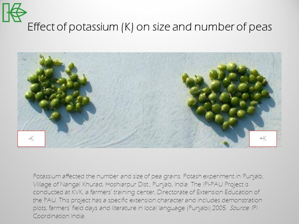 Effect of potassium (K) on size and number of peas